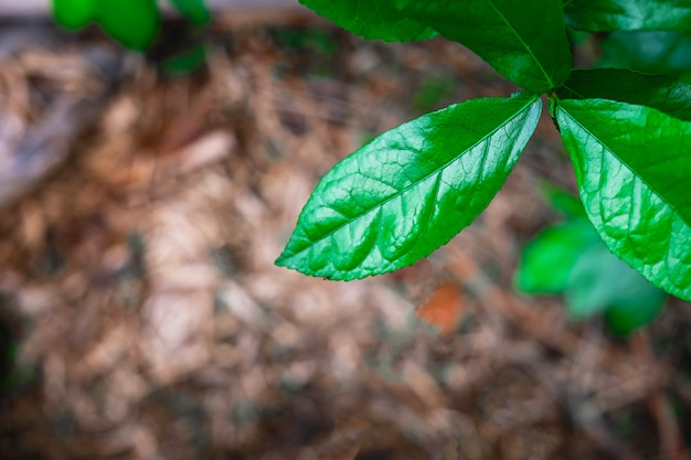 Natural, green leaves in the rainforest