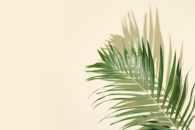 薄黄色の表面に日よけのある自然な緑のヤシの葉