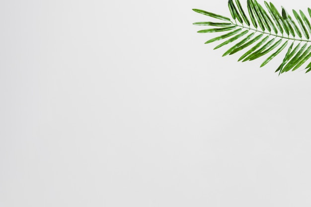 Natural green palm leaves on the corner of the white background