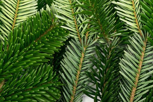 Натуральная зеленая еловая веточка фона или текстуры