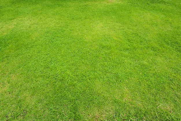Natural green sward background and texture, green grass field background