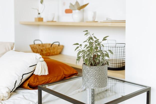 Натуральные комнатные растения в ярком, стильном интерьере спальни.