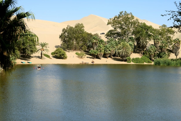 Natural lagoon at huacachina oasis town surrounded by many palm trees and amazing sand dune
