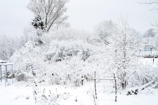 Природный ландшафт снежно-белого зимнего замерзшего леса в хорошую безветренную погоду в деревне. деревья и ветви полностью покрыты снегом или инеем