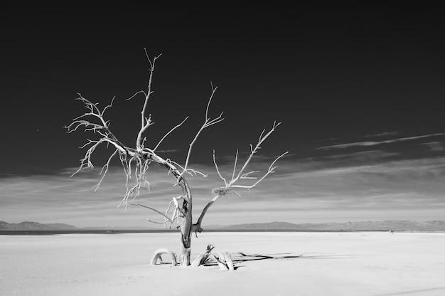 Природный ландшафт с засохшим деревом
