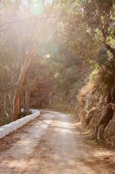 Paesaggio naturale con strada e alberi