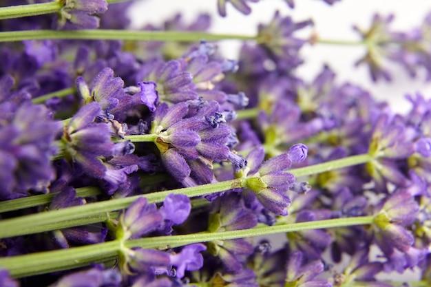 천연 라벤더 꽃 봉오리가 가까이