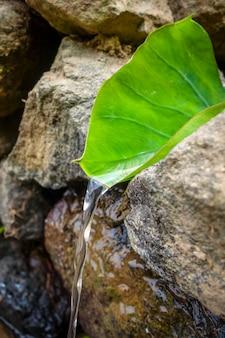 サントアンタオ、アフリカのカーボベルデの自然の葉の噴水