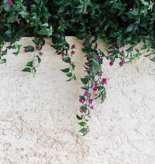 자연 잎 및 복사 공간 벽 배경
