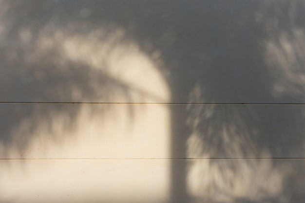 Natural leaves shadow on white concrete wall background.