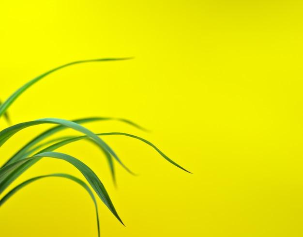 Природные листья текстуры абстрактный фон упали изогнутые ботаники, изолированные на желтом фоне