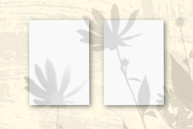 Естественный свет отбрасывает тени от цветов топинамбура на 2 вертикальных листах бумаги.