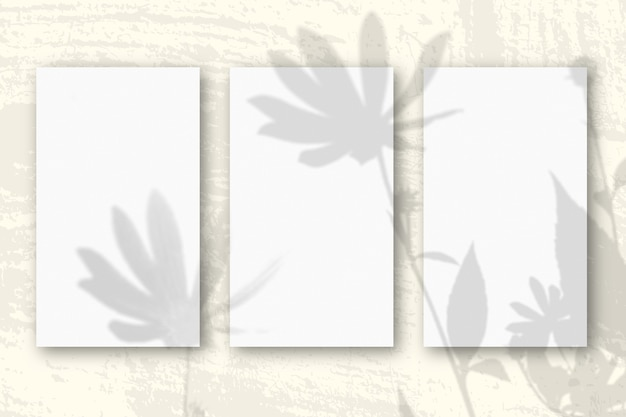 Естественный свет отбрасывает тени от цветов топинамбура на 3 вертикальных листах бумаги.