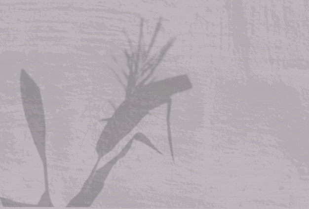 Естественный свет отбрасывает тени от колосков и листьев растений на бежевую стену.
