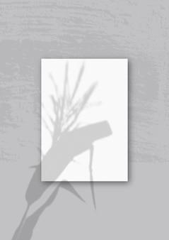 Естественный свет отбрасывает тени от колосков и листьев на вертикальный лист а4.