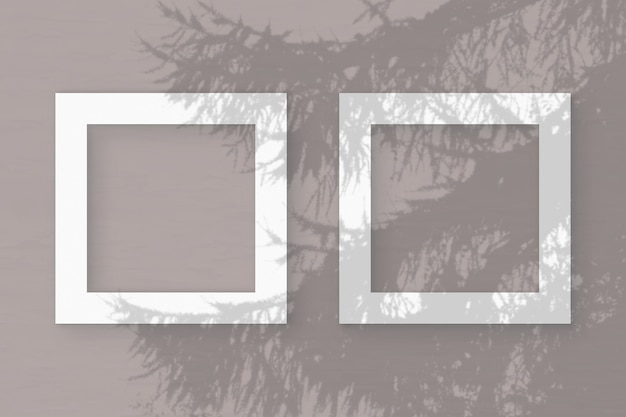 자연광은 흰색 질감 종이 2 개 정사각형 프레임에 스프루스 가지에서 그림자를 드리 웁니다.