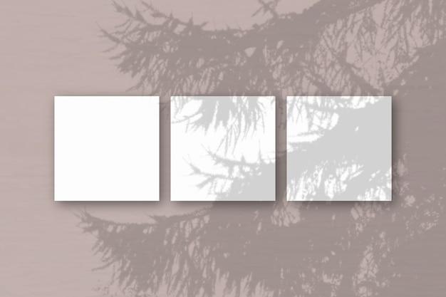 자연광이 흰색 질감 종이 3 장에 스프루스 가지의 그림자를 드리 웁니다.