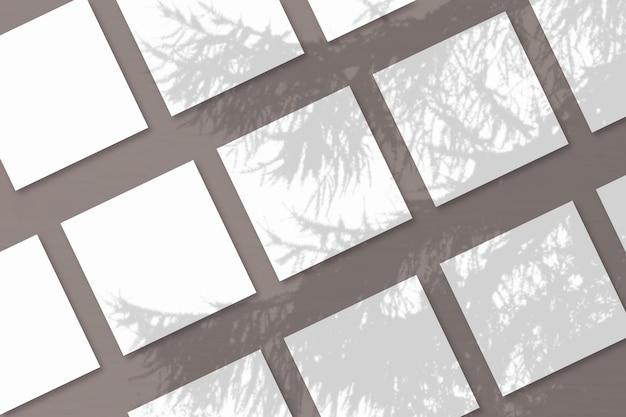 자연광은 흰색 질감 종이 여러 장에 스프루스 가지에서 그림자를 투사합니다.