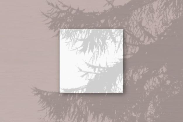 Естественный свет отбрасывает тени от еловой ветки на квадратный лист белой фактурной бумаги.