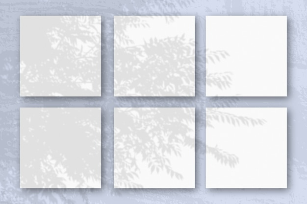 자연광은 흰색 질감 종이 6 장에 이국적인 식물의 그림자를 드리 웁니다.