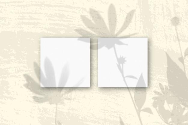 자연광은 흰색 질감 종이 2 장에 예루살렘 아티 초크 꽃의 그림자를 드리 웁니다.