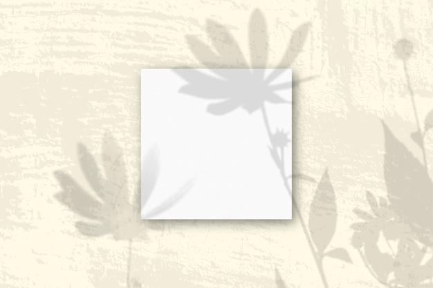 자연광은 흰색 질감 종이 3 장에 예루살렘 아티 초크 꽃의 그림자를 드리 웁니다.