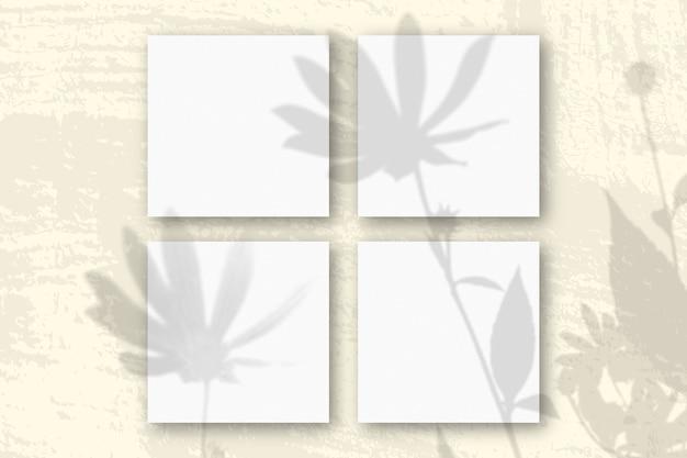 자연광은 흰색 질감 종이 4 장에 예루살렘 아티 초크 꽃의 그림자를 드리 웁니다.