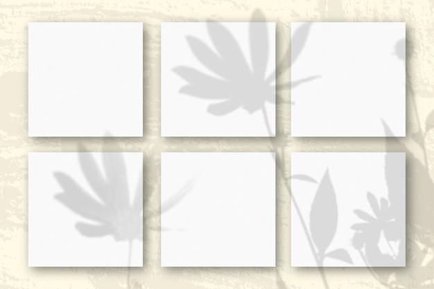 자연광은 흰색 질감 종이 6 장에 예루살렘 아티 초크 꽃의 그림자를 드리 웁니다.
