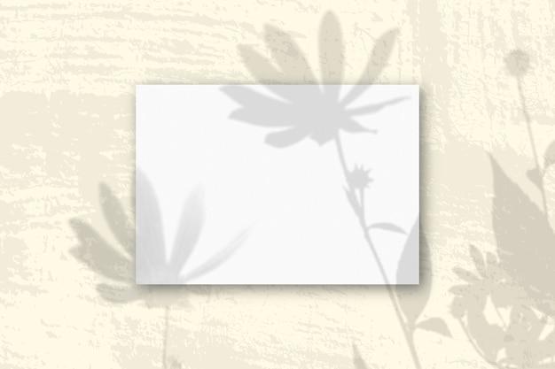 自然光は、白い織り目加工の紙の水平a4シートにエルサレムアーティチョークの花から影を落とします
