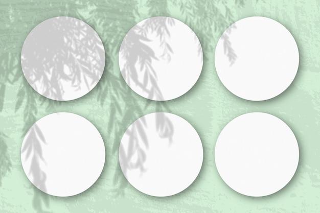 자연광은 흰색 질감 종이 6 개의 둥근 정사각형 시트에 버드 나무 가지에서 그림자를 드리 웁니다.