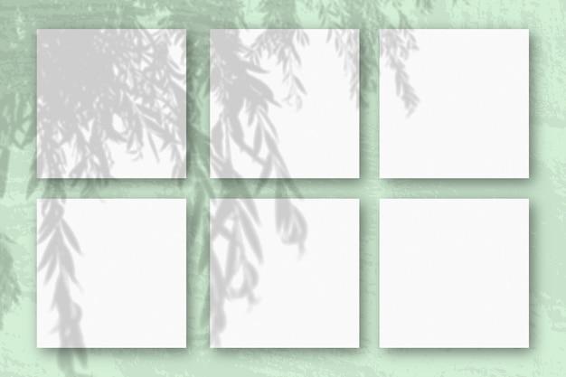 자연광은 흰색 질감 종이 6 장에 버드 나무 가지에서 그림자를 드리 웁니다.