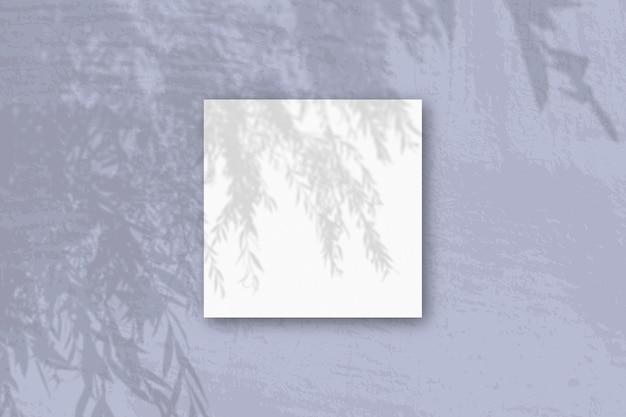 자연광은 흰색 질감 종이의 정사각형 시트에 버드 나무 가지에서 그림자를 투사합니다.