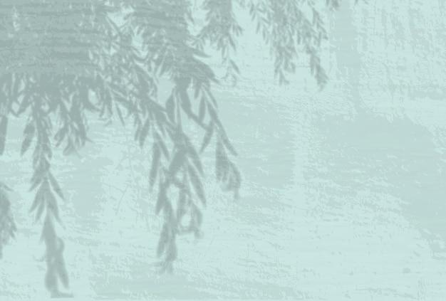 Естественный свет отбрасывает тени от ветки ивы на сине-зеленый фон стены.