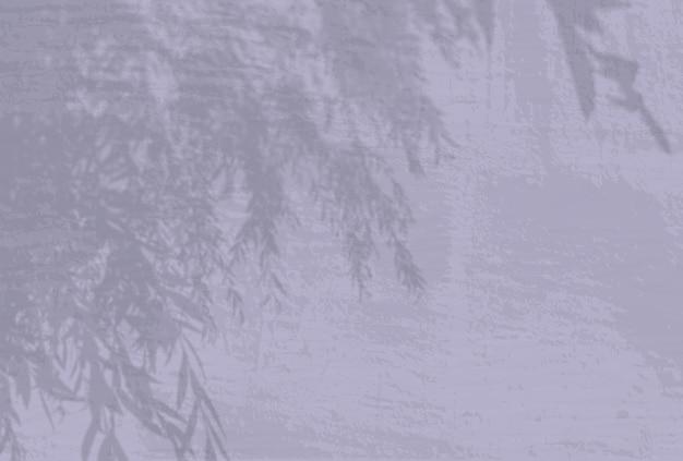Естественный свет отбрасывает тени от ветки ивы на сиреневый фон стены.