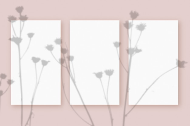 Natural light casts shadows from the plant on 3 vertical sheets of white textured paper format, lying on a pink textured background. mockup.