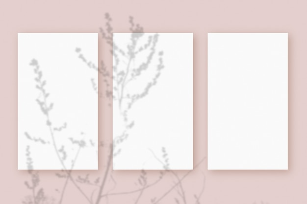 Natural light casts shadows from the plant on 3 vertical sheets of white textured paper format, lying on a pink textured background. mockup