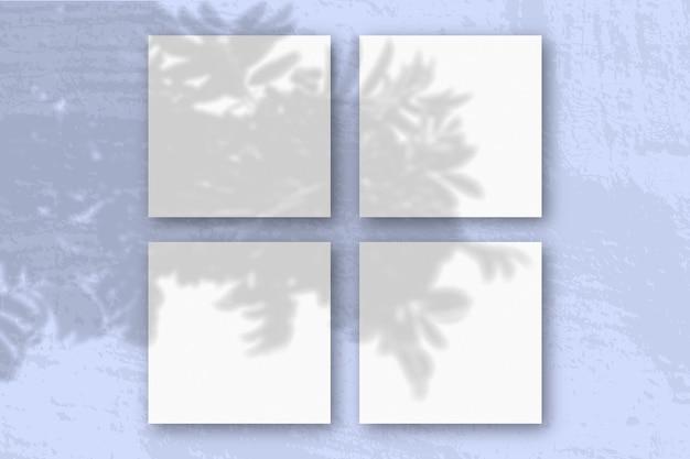 Естественный свет отбрасывает тени от ветки рябины на 4 квадратных листа.