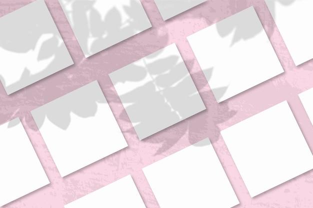자연광은 흰색 질감 종이 여러 장에 로완 지점의 그림자를 드리 웁니다.