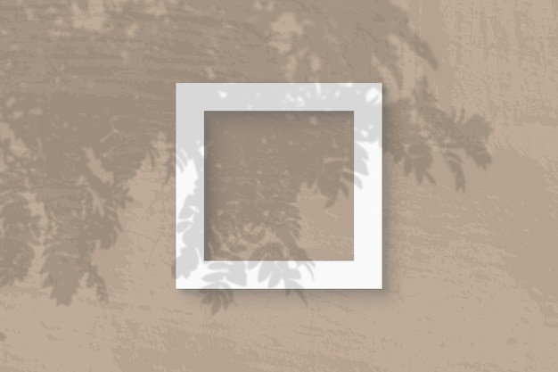 Естественный свет отбрасывает тени от ветки рябины на квадратную рамку