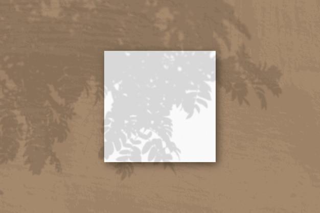 자연광은 흰색 질감 종이의 정사각형 시트에 로완 지점에서 그림자를 투사합니다.