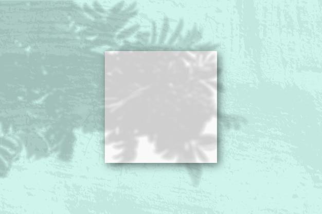 Естественный свет отбрасывает тени от ветки рябины на квадратный лист