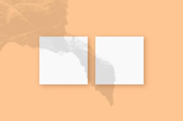 자연광은 베이지색 질감 배경에 놓인 2개의 정사각형 흰색 종이에 식물의 그림자를 드리웁니다. 모형