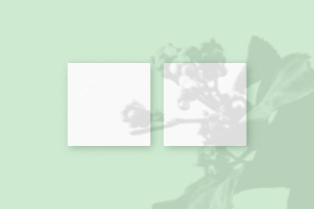 자연광은 녹색 질감 배경에 놓인 2개의 정사각형 흰색 종이에 식물의 그림자를 드리웁니다. 모형.