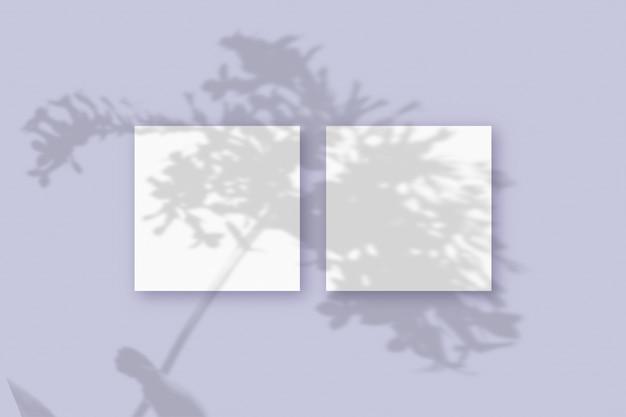 자연광은 보라색 질감 배경에 놓인 2개의 정사각형 흰색 종이에 식물의 그림자를 드리웁니다. 모형