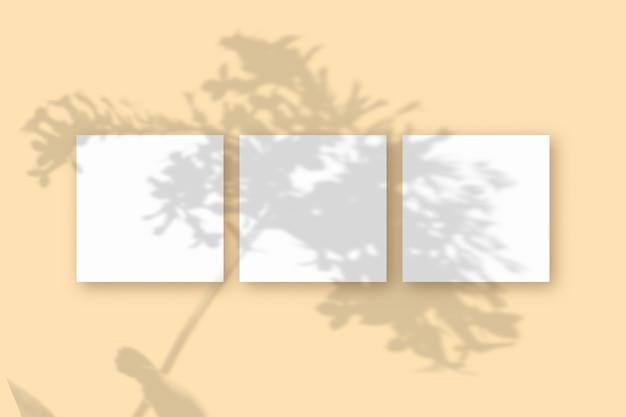 Естественный свет отбрасывает тени от растений на 3 квадратных листа белой фактурной бумаги, лежащих на макете.