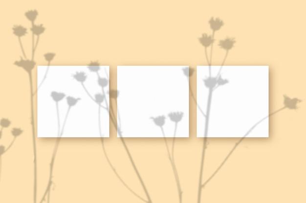 Естественный свет отбрасывает тени от растений на 3 квадратных листа белой текстурированной бумаги, лежащих на бежевом текстурированном фоне. макет.