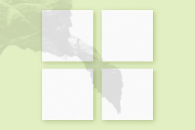 자연광은 녹색 질감 배경에 놓인 4개의 정사각형 흰색 종이에 식물의 그림자를 드리웁니다. 모형.