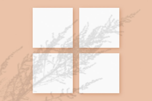 자연광은 주황색 질감의 배경에 놓인 4개의 정사각형 흰색 종이에 식물의 그림자를 드리웁니다. 모형.