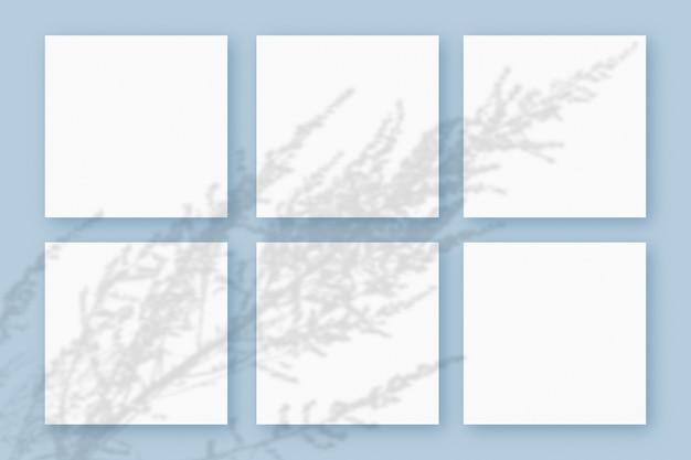自然光は、青いテクスチャの背景に横たわっている白い紙の6つの正方形のシートに植物から影を落とします。モックアップ。