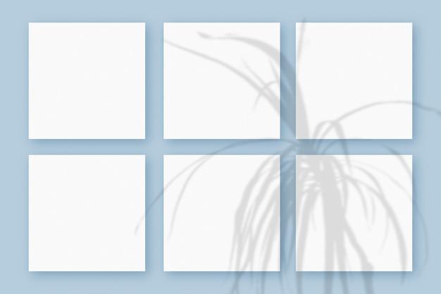 자연광은 푸른 질감의 배경 위에 놓인 6개의 정사각형 흰색 종이에 식물의 그림자를 드리웁니다. 모형